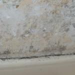 moisissures murs plafonds